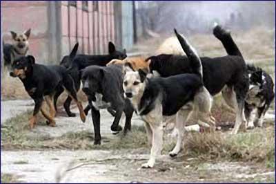 Psi lutalice www.srbijalov.com